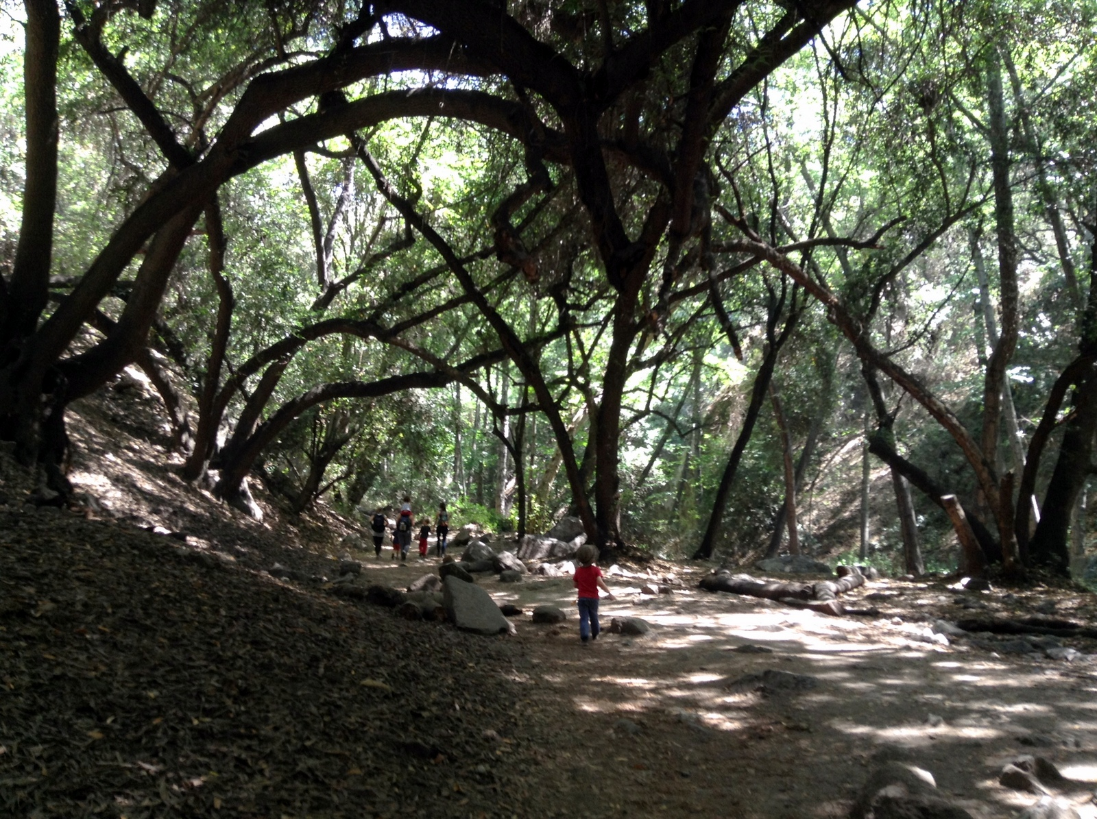 Monrovia Canyon Falls: The Perfect Family Hike