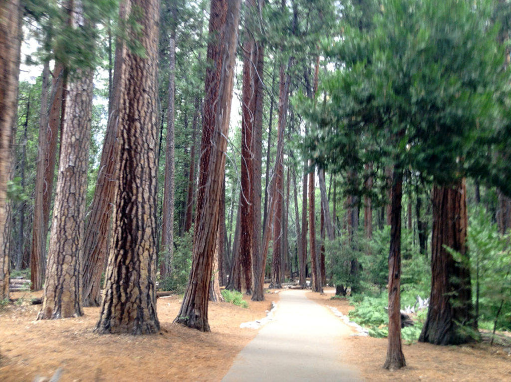 Explore Yosemite with kids on the 12 miles of bike trails