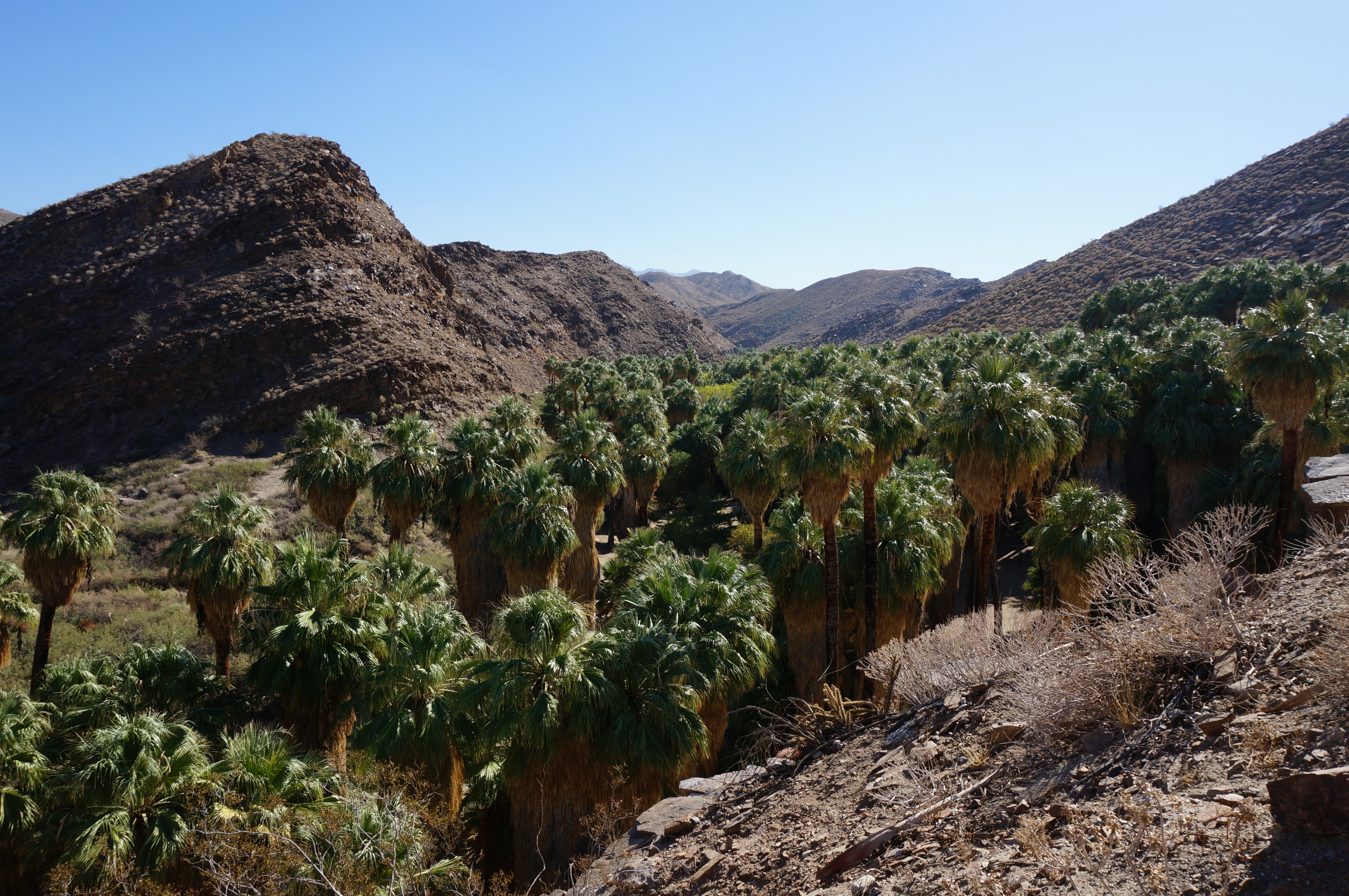 Family Friendly Hiking in Palm Springs at Indian Canyons