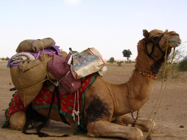 Travel Memories: Jaisalmer