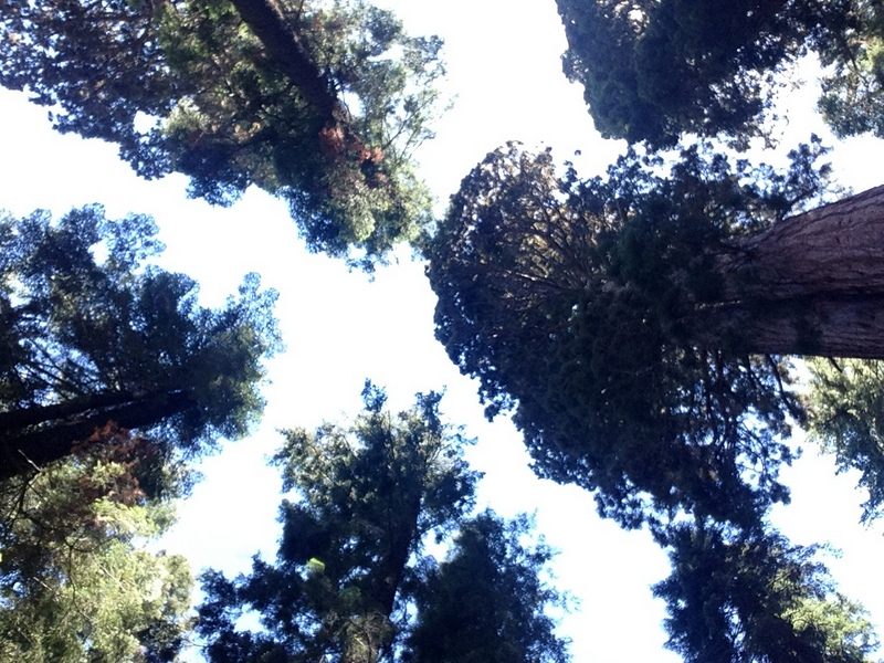 What to do in Sequoia National Park in One Day