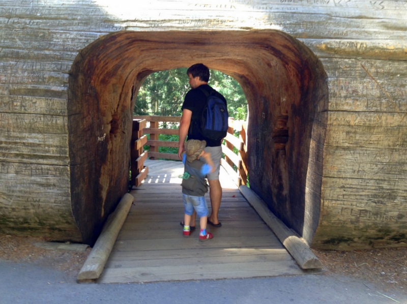 Visiting Sequoia National Park in One Day