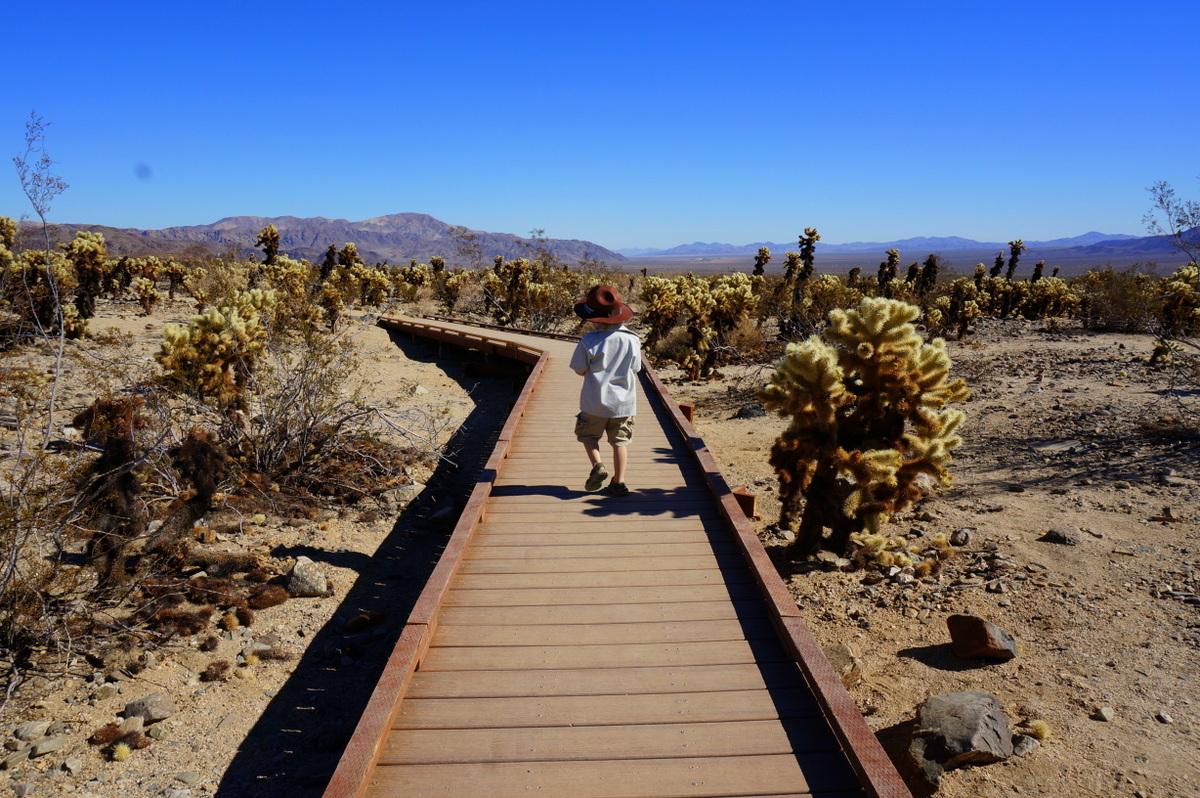Cholla Cactus Garden - A great family friendly joshua tree hikes