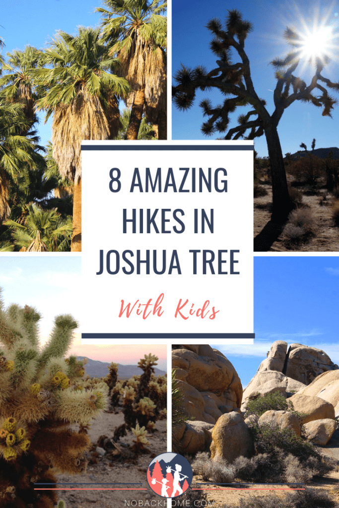 8 Amazing Joshua Tree hikes for first timers with or without kids!