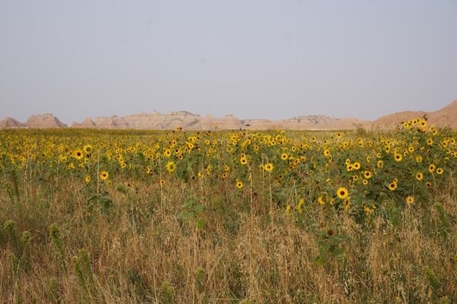 Best National Park for Families: Badlands