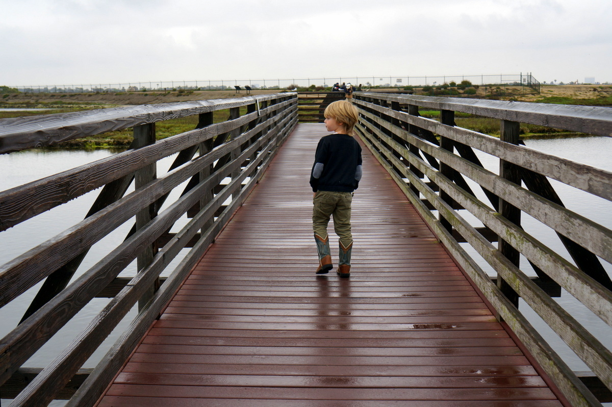 Bolsa Chica Reserve - Things to do in Huntington beach