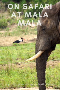 Being on safari at Mala Mala Game Reserve in South Africa ensures you will see the Big 5 up close and personal
