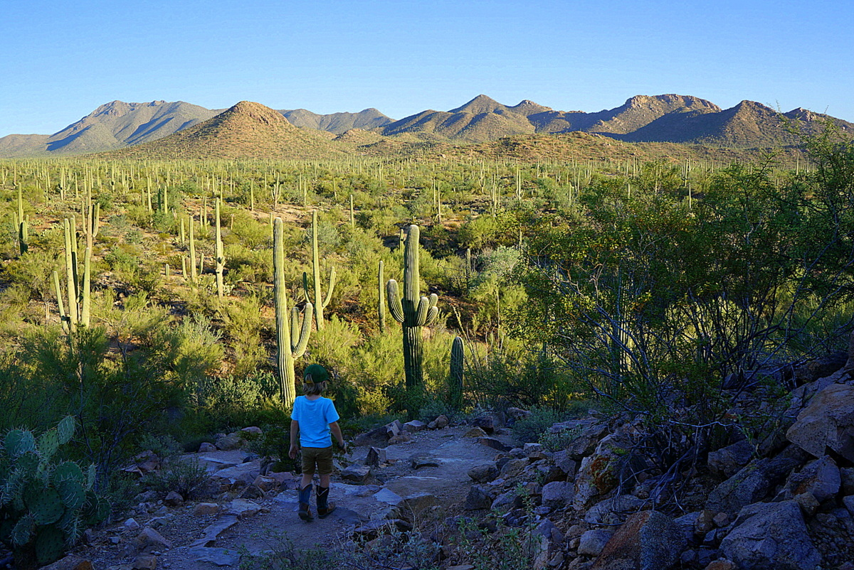 Saguaro National Park in One Day