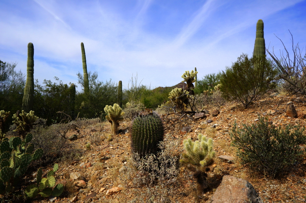 15 Fun Things To Do In Tucson With Kids