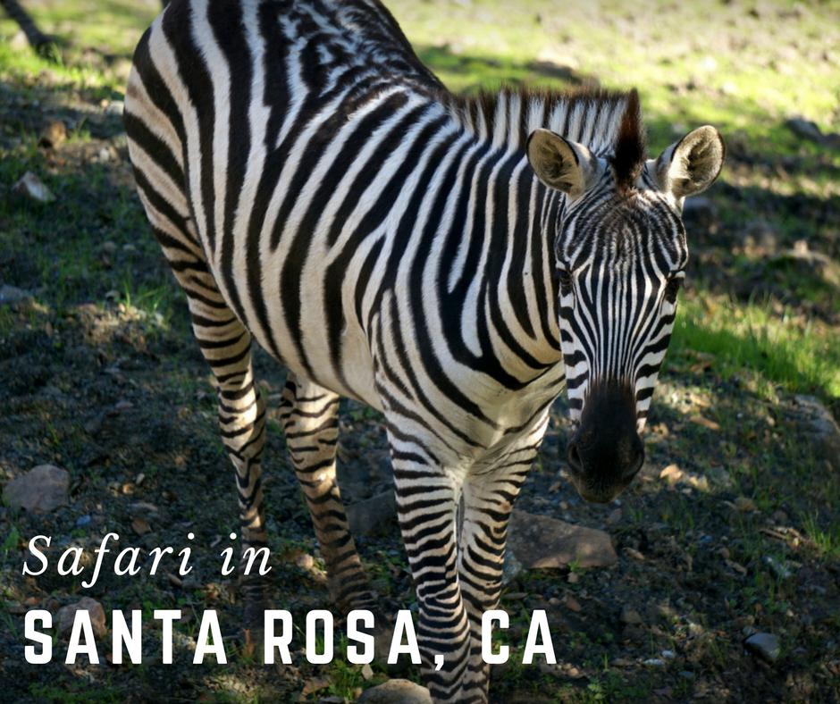 Go On Safari In Santa Rosa, CA