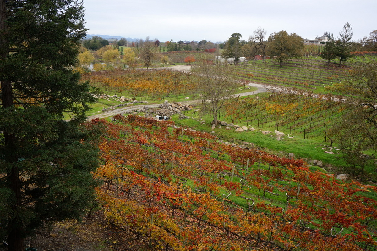 Wine tasting is a top thing to do in Santa Rosa California