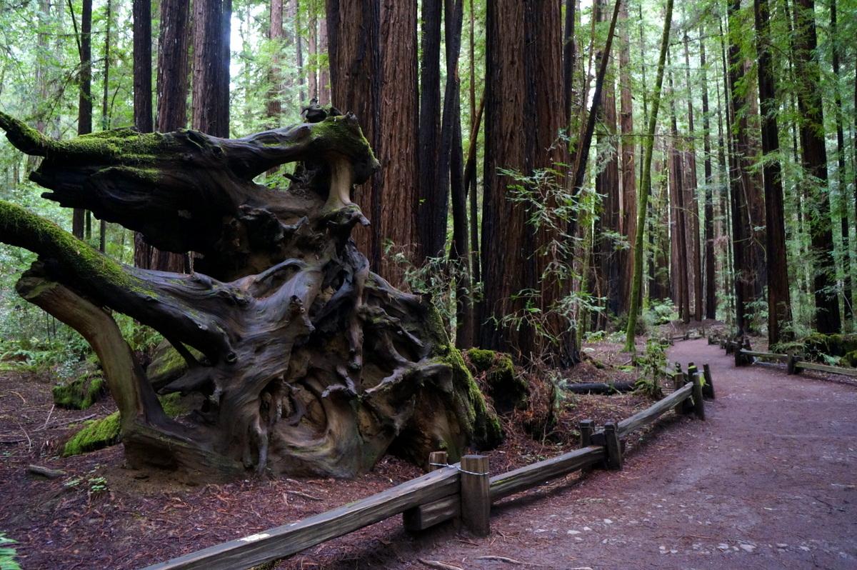 Get ourdoors when visiting Santa Rosa California