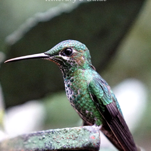 Itinerary And Guide For Monteverde, Costa Rica