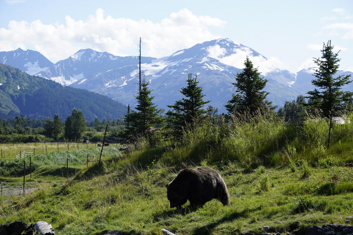 Alaska road trip itinerary -Alaska Conservation Center