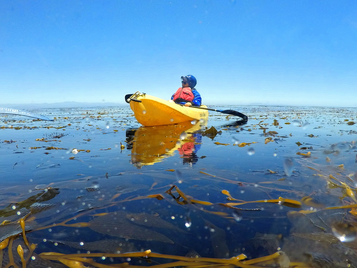 Channel Islands kayaking with kids
