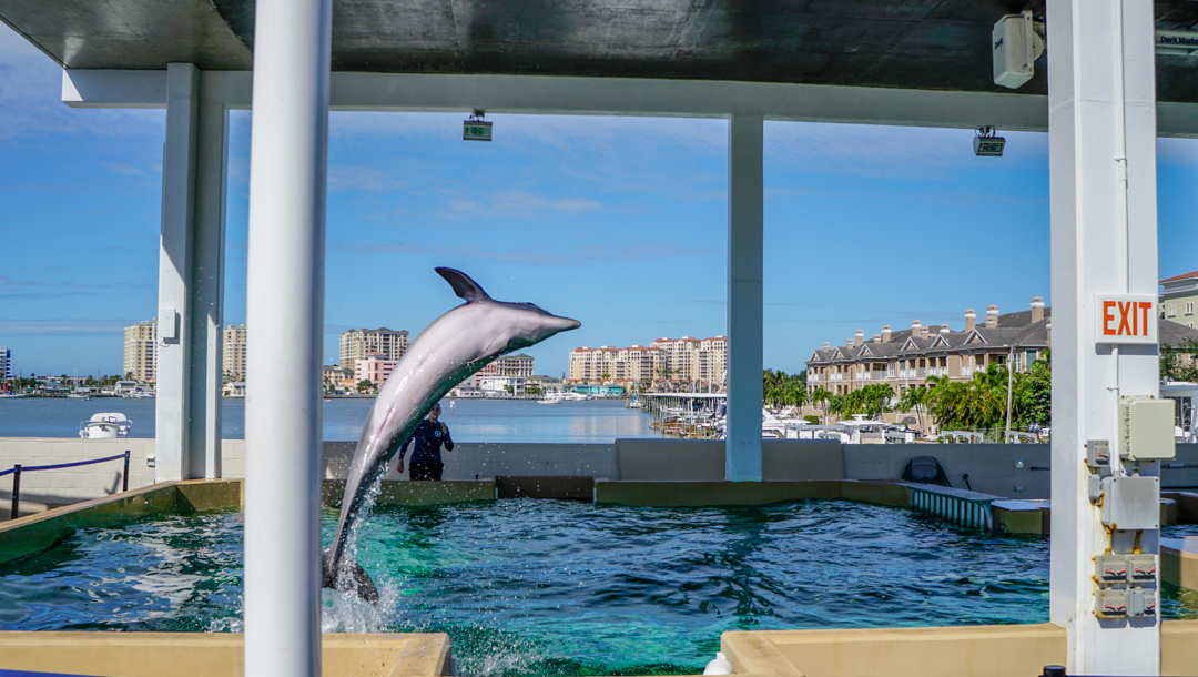 Clearwater Florida is home to Winter the Dolphin