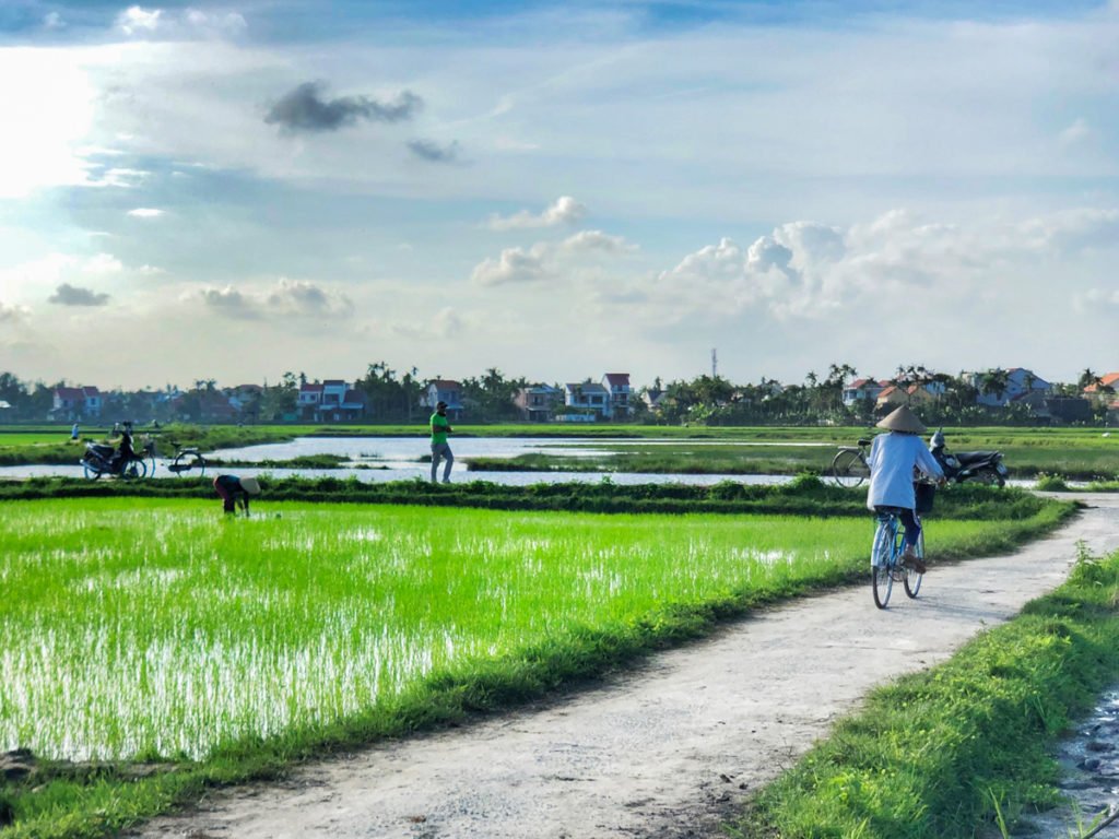 Riding bikes in the paddy fields in Hoi An with kids