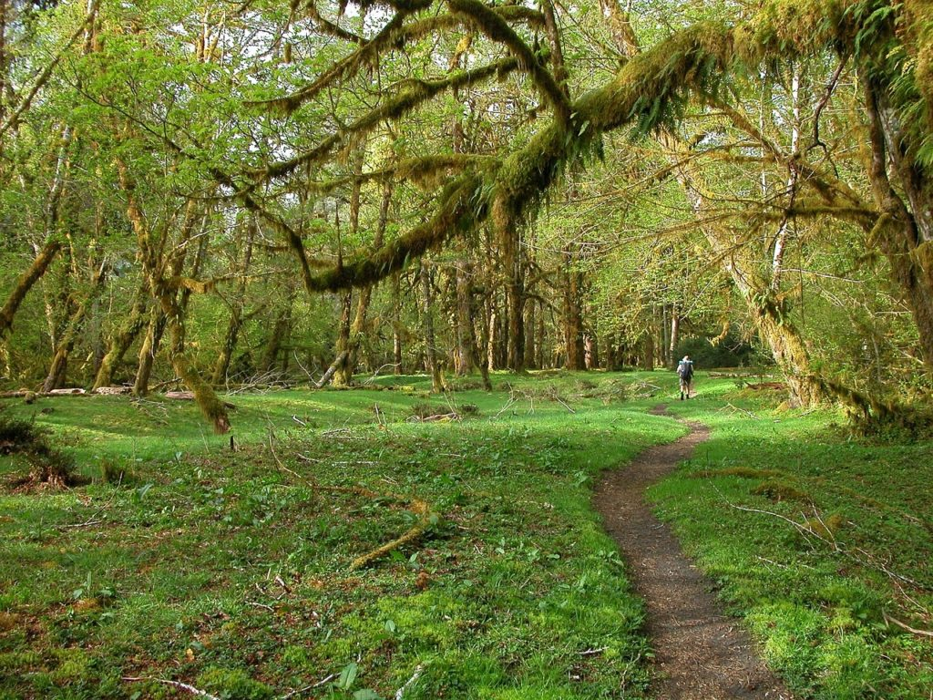 Olympic National Park is the first stop on On Your West Coast National Park Road Trip