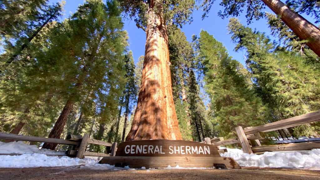 General Sherman Tree in Sequoia National Park in Winter