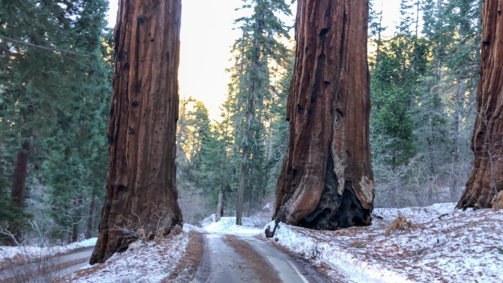 Road to Giants in Sequoia National Park in Winter